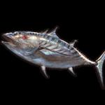 【グラブル】サポ石としてさらに価値が下がってしまったカツオと鰻の未来はどうなる?
